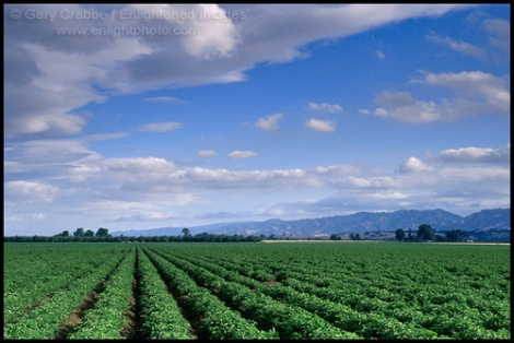 Gary Crabbe www.enlightphoto.com